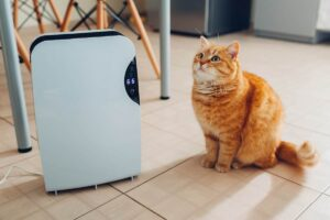 Best Air Purifier for Pets of 2019 – Complete Reviews with Comparison